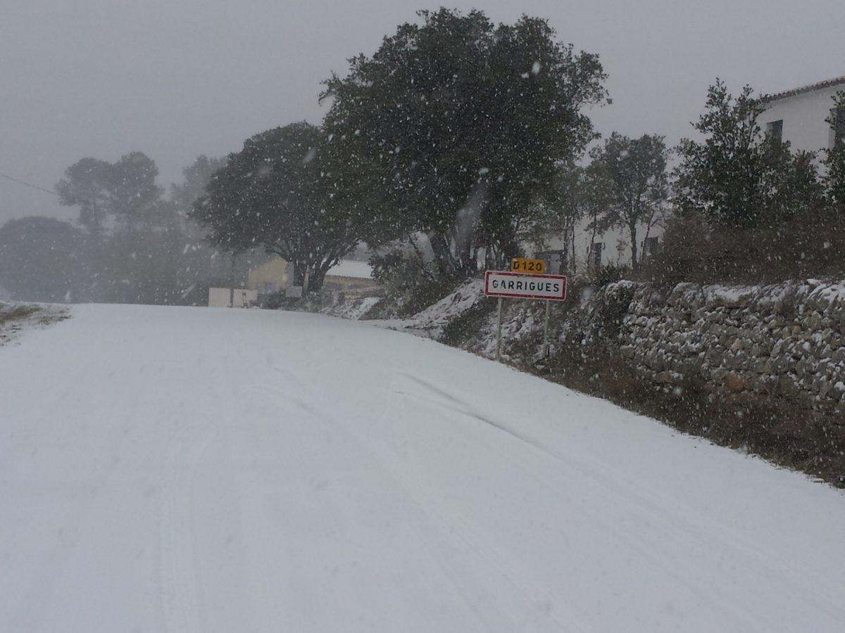 Garrigues sous la neige en 2018